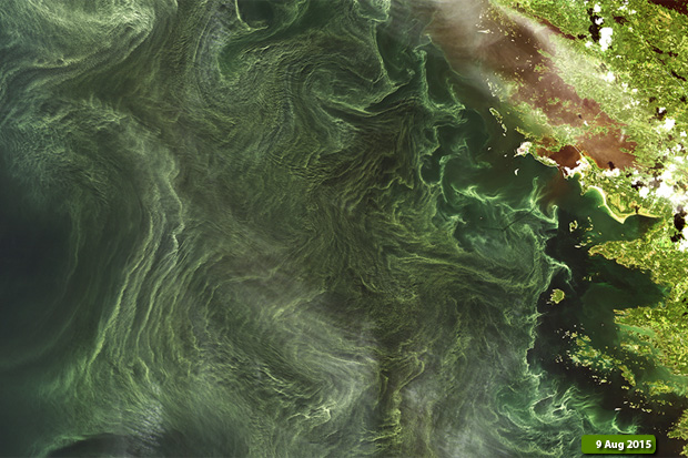 Algal bloom on 9 August 2015
