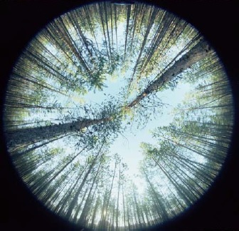 Hemispheric photograph of the Scots pine canopy